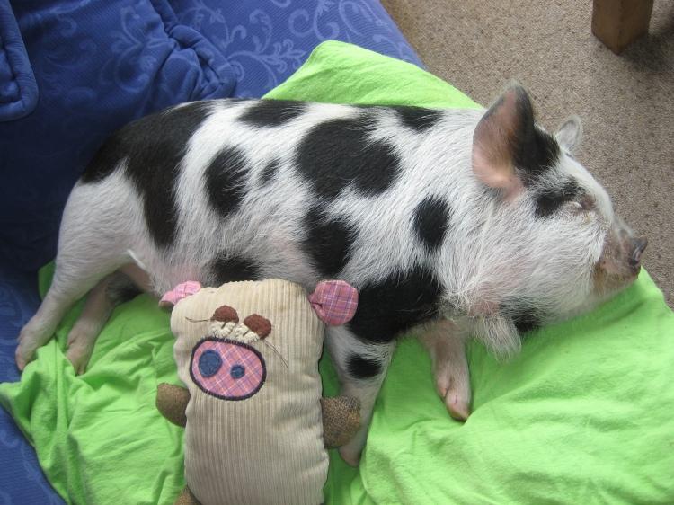 Piggy with piggy