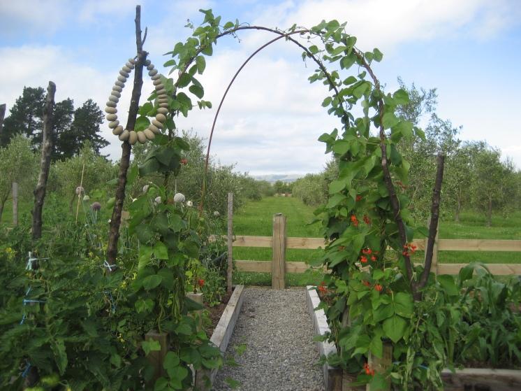 Abundant MAD vege garden